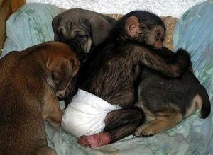 chimpanddogs